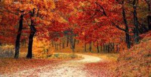 Ekim Ayı ile İlgili Şiirler