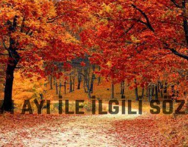 Ekim Ayı ile İlgili Sözler
