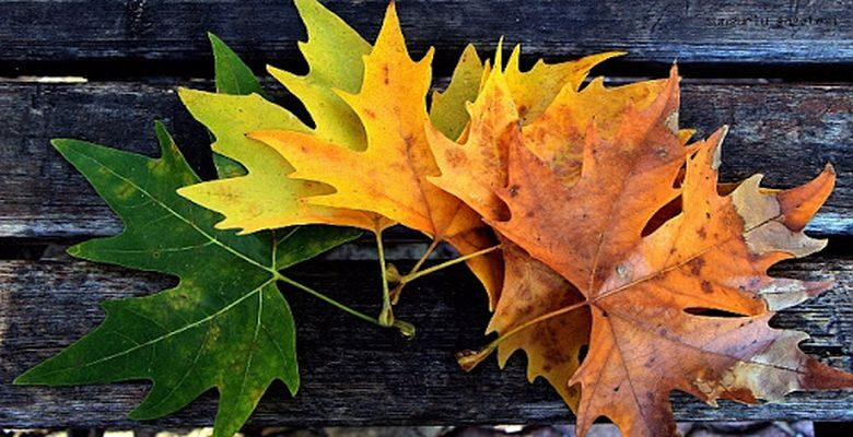Kasım Ayı ile İlgili Şiirler Ünlü Şairlerden