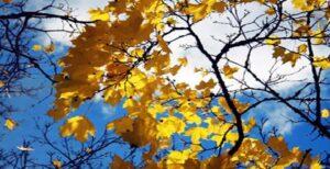 Kasım Şiirleri Ünlü Şairlerden