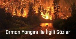 Orman Yangını ile İlgili Sözler